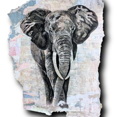 Elephant 220x185cm
