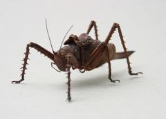 Ghyslain Bertholon - grasshopper boy 3D