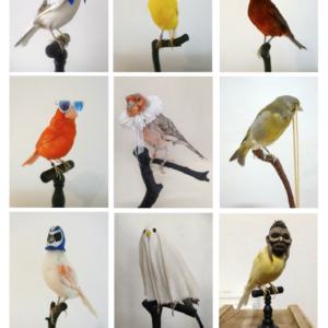 Oiseau taxidermisé + accessoires + Cloche de verre  Dimension totale : H 42 x 22 x 22 cm - Exemplaire unique